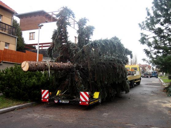 Vánoční strom (11,5x4,5m)